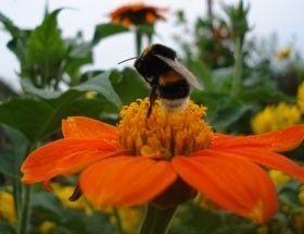 Декоративне оформлення квітника на садовій ділянці, в саду