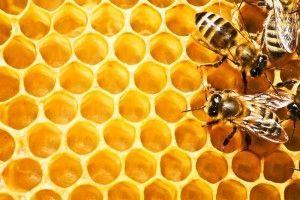 Чи можна їсти бджолині стільники? Користь від вживання бджолиних сот