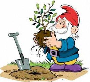 Корисні поради і рекомендації садівникам і городникам + відео