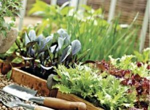 Вирощуємо овочі в домашніх умовах цілий рік